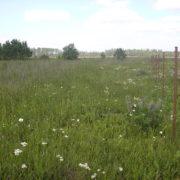 Продажа участка в Лампово